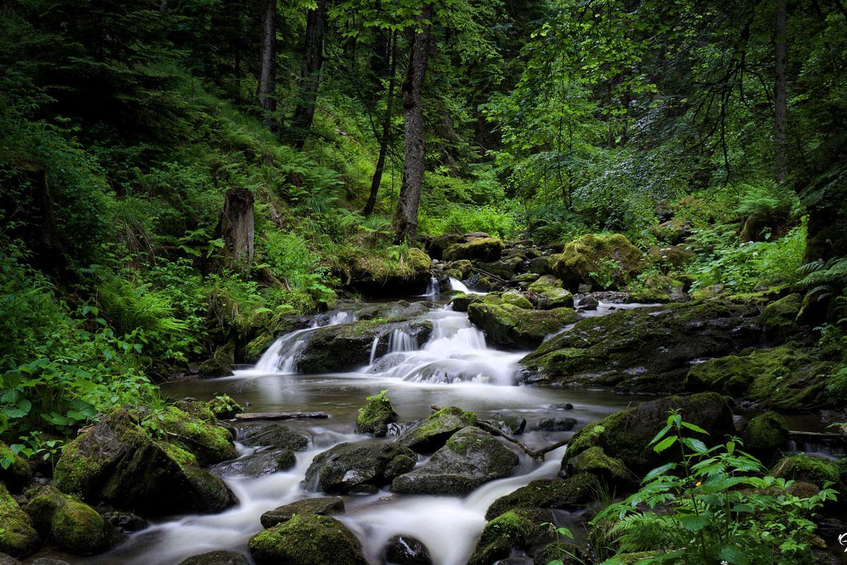CRI_Savegre-Cloud-Forest-©-Horizontes-002.jpg