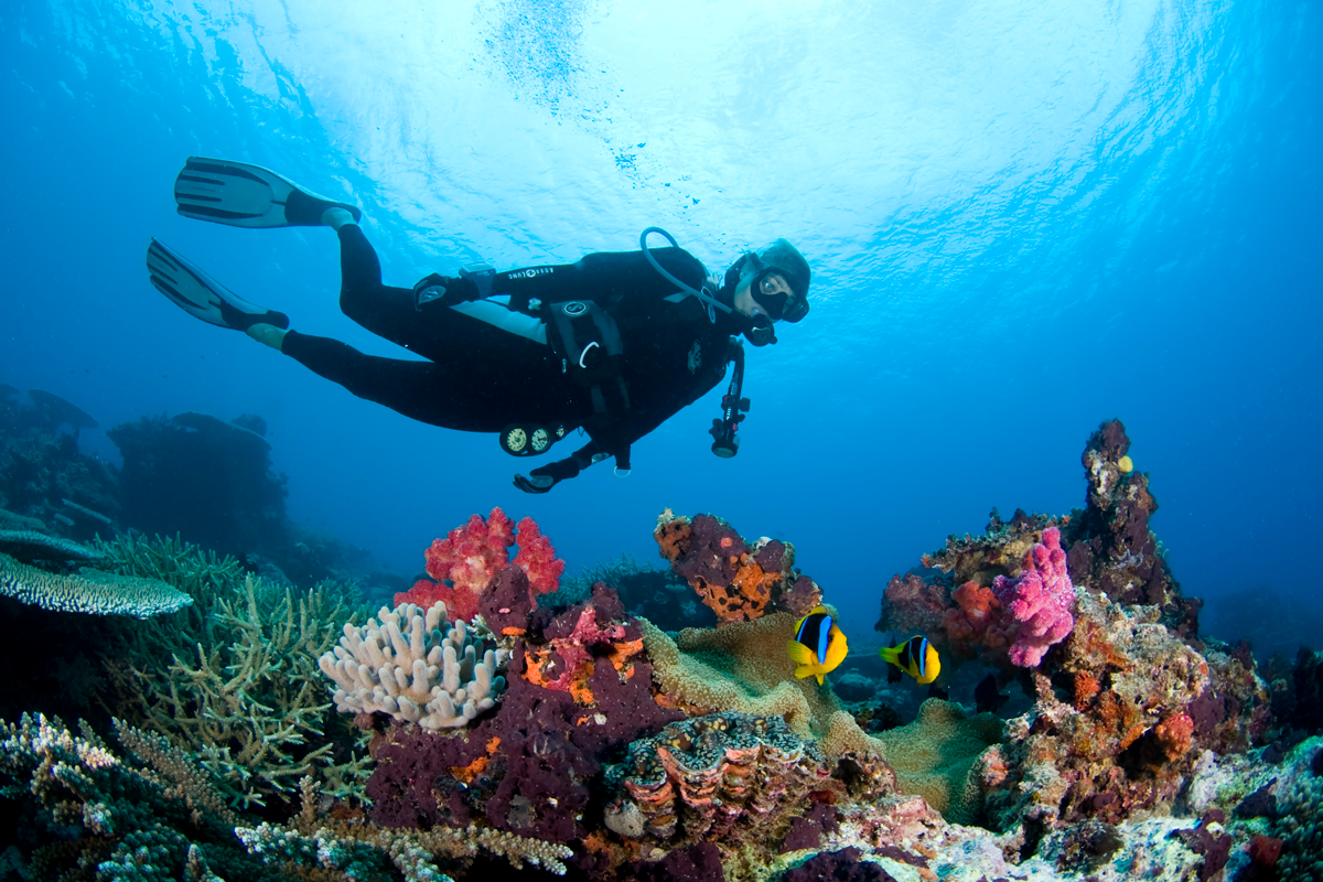 FJI_Rainbow-Reef-©14-Thomas-Baechtold-2995.png
