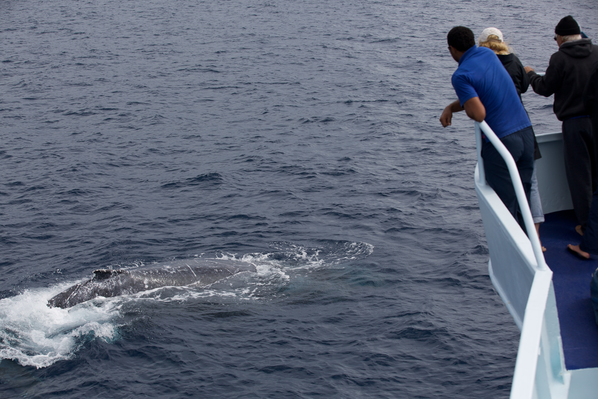 TON_Humpback-whales-above-©14-Thomas-Baechtold-1264.png