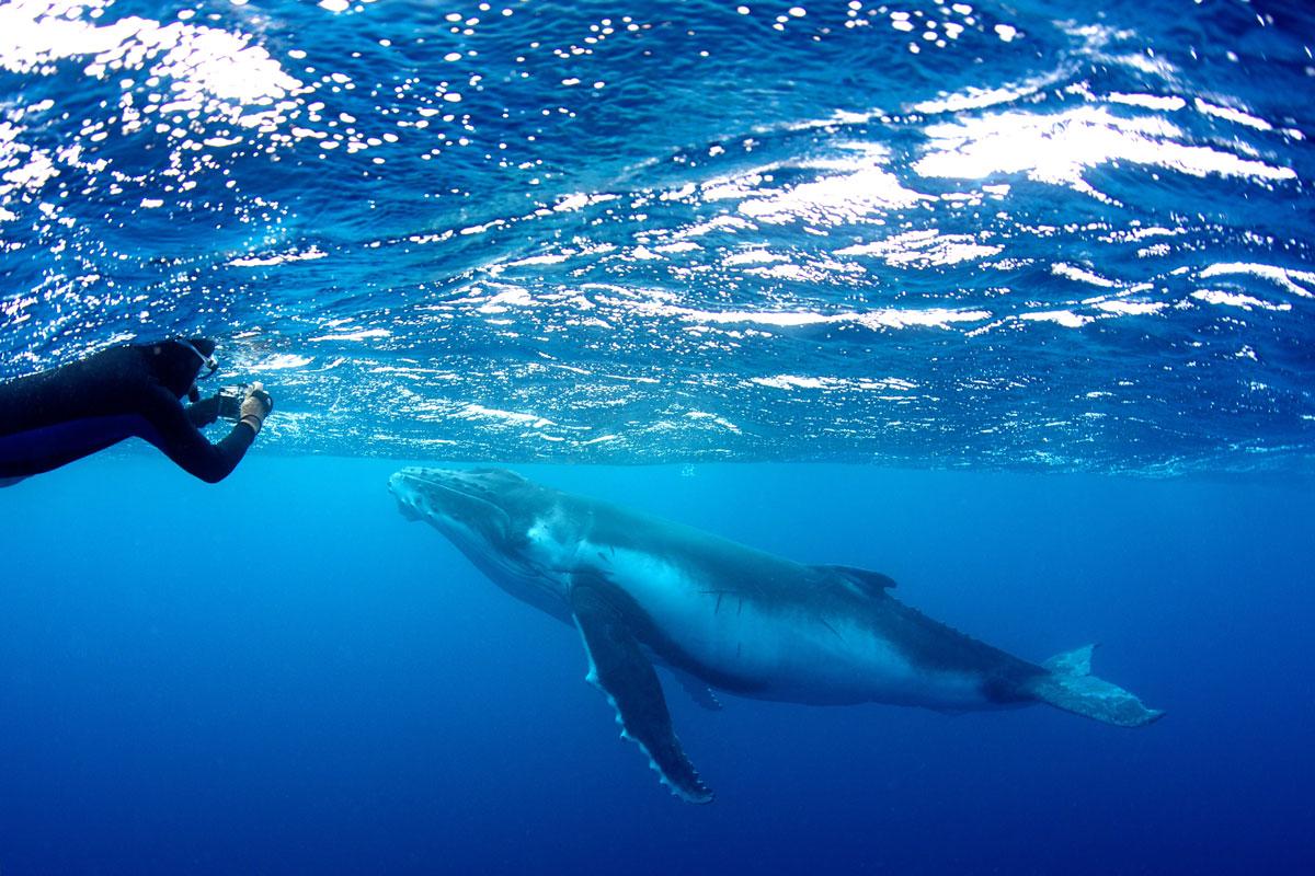 TON_Humpback-whales-uw-©14-Thomas-Baechtold-0129.jpg