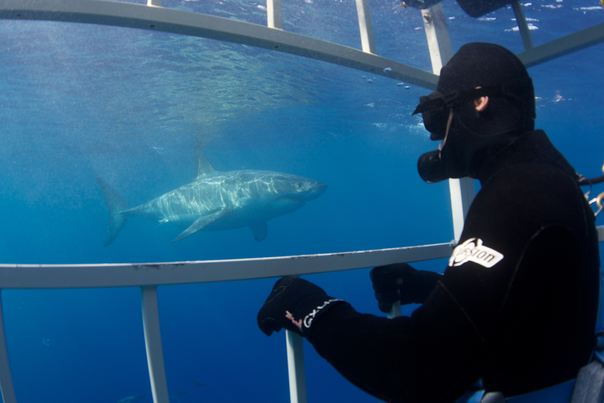 MEX_Guadelupe-UW-Great-White-Sharks-©13-Thomas-Baechtold-311.png