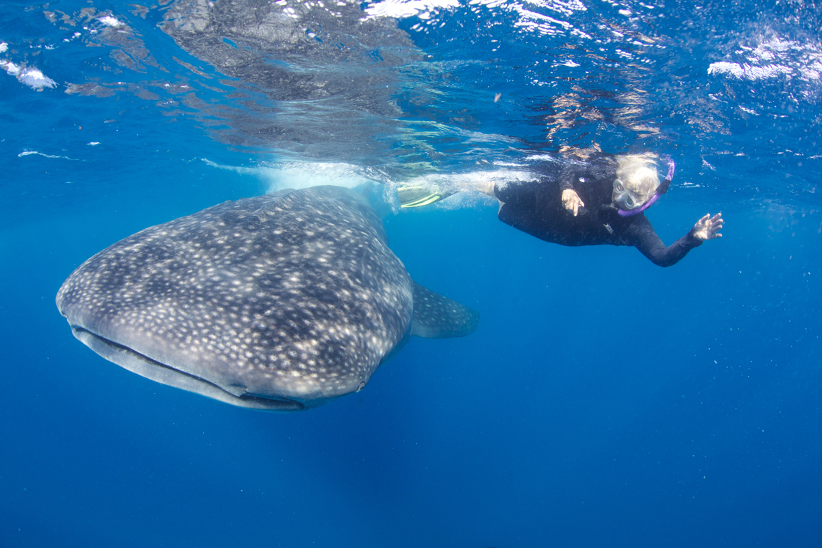 MEX_Isla-Mujeres-UW-Whale-Sharks-©13-Thomas-Baechtold-524.png