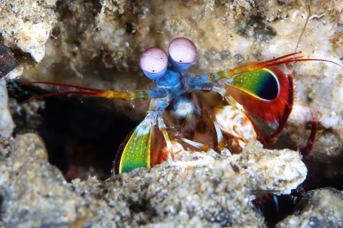 IDN_Ambon-Muck-diving-uw-©17-Thomas-Baechtold-922.jpg