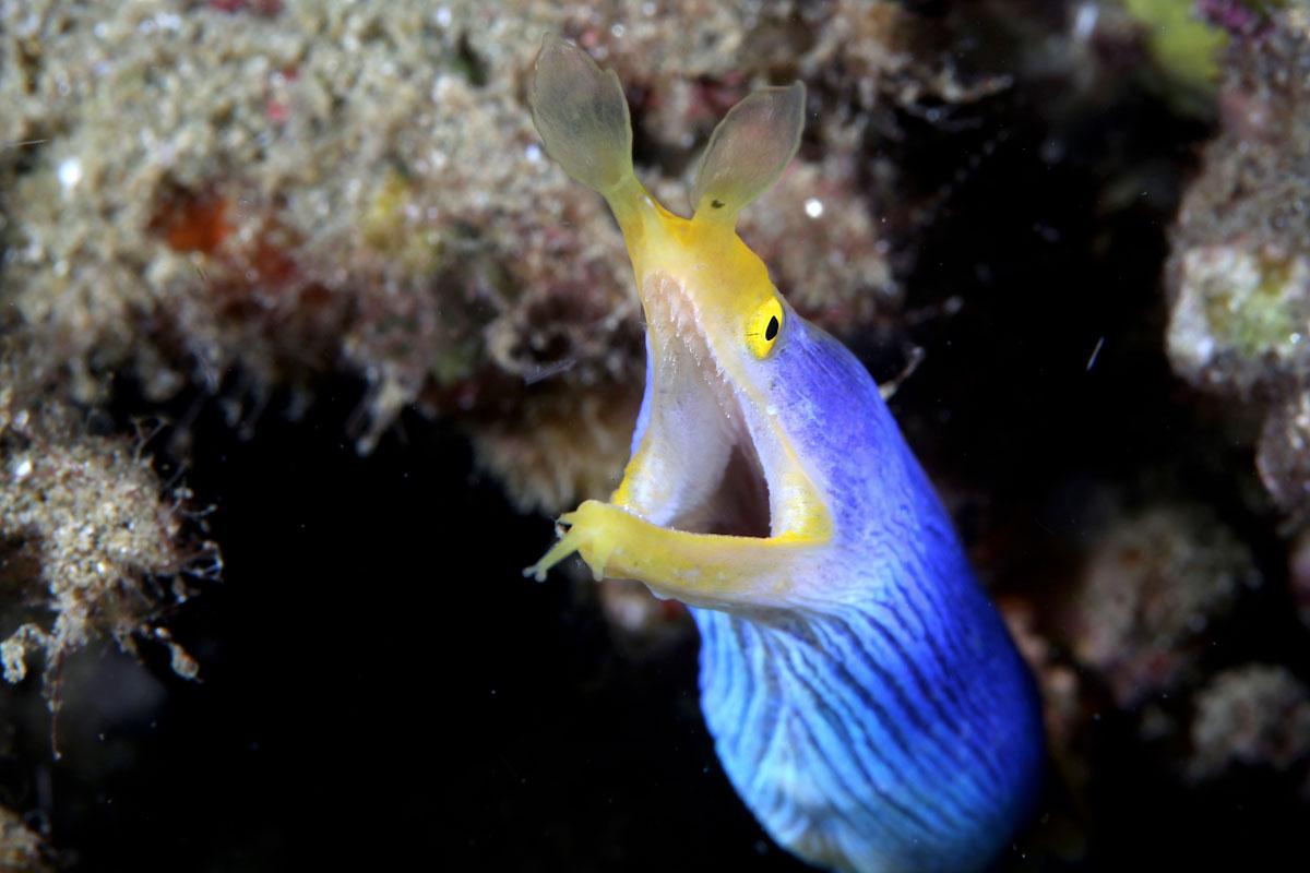 IDN_Ambon-Muck-diving-uw-©17-Thomas-Baechtold-1005.jpg