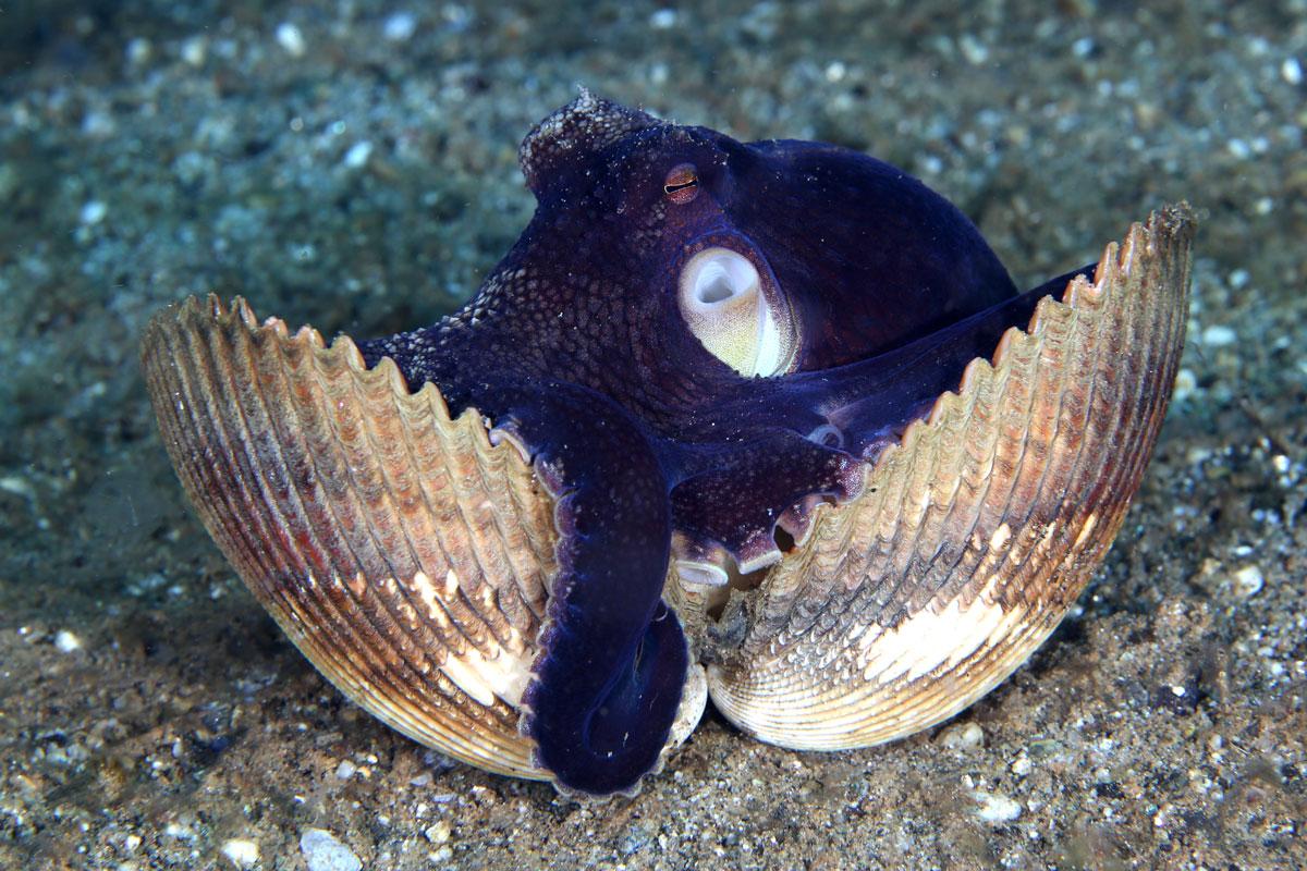 IDN_Ambon-Muck-diving-uw-©17-Thomas-Baechtold-1129.jpg
