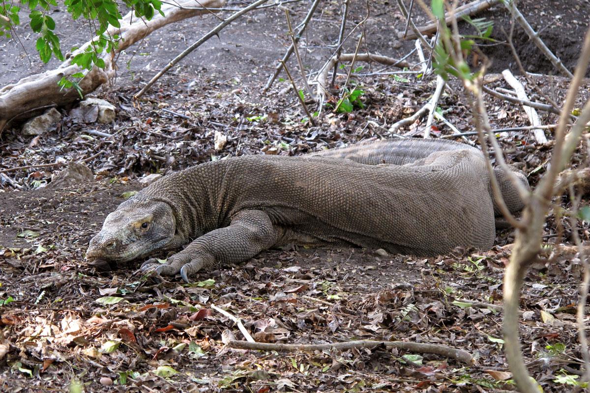 IDN_Komodo-Island-©17-Thomas-Baechtold-348.jpg