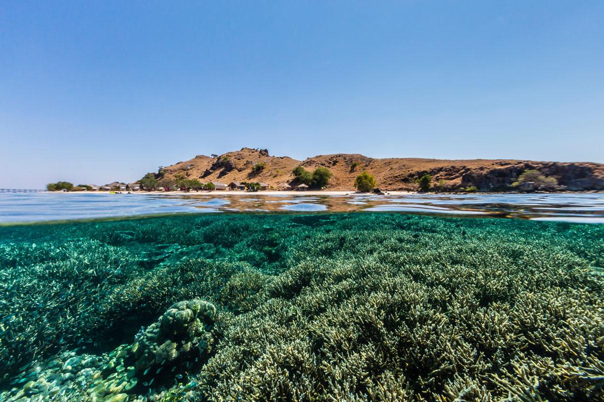 IDN_Komodo-Resort-House-Reef-©-Komodo-Resort-048.jpg