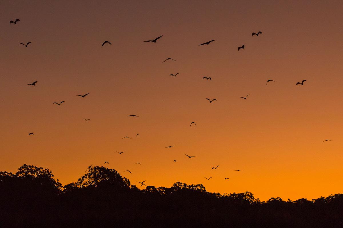 IDN_Komodo-Resort-Sunset-Bat-Tour-©-Komodo-Resort-053.jpg