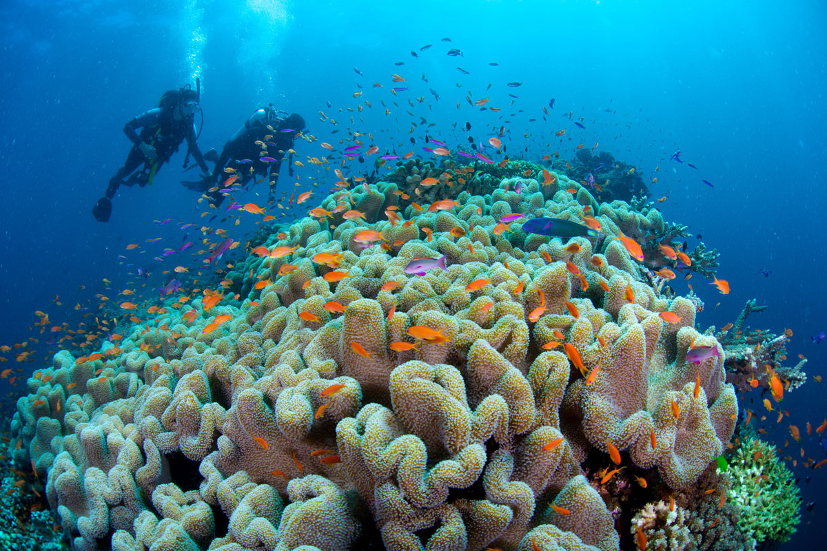 FJI_Rainbow-Reef-©14-Thomas-Baechtold-2242.jpg