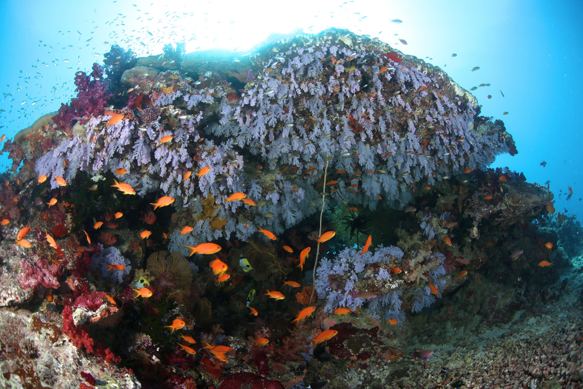FJI_Taveuni-Island-UW-Jerrys-Jelly-©17-Natalia-Baechtold-069.jpg