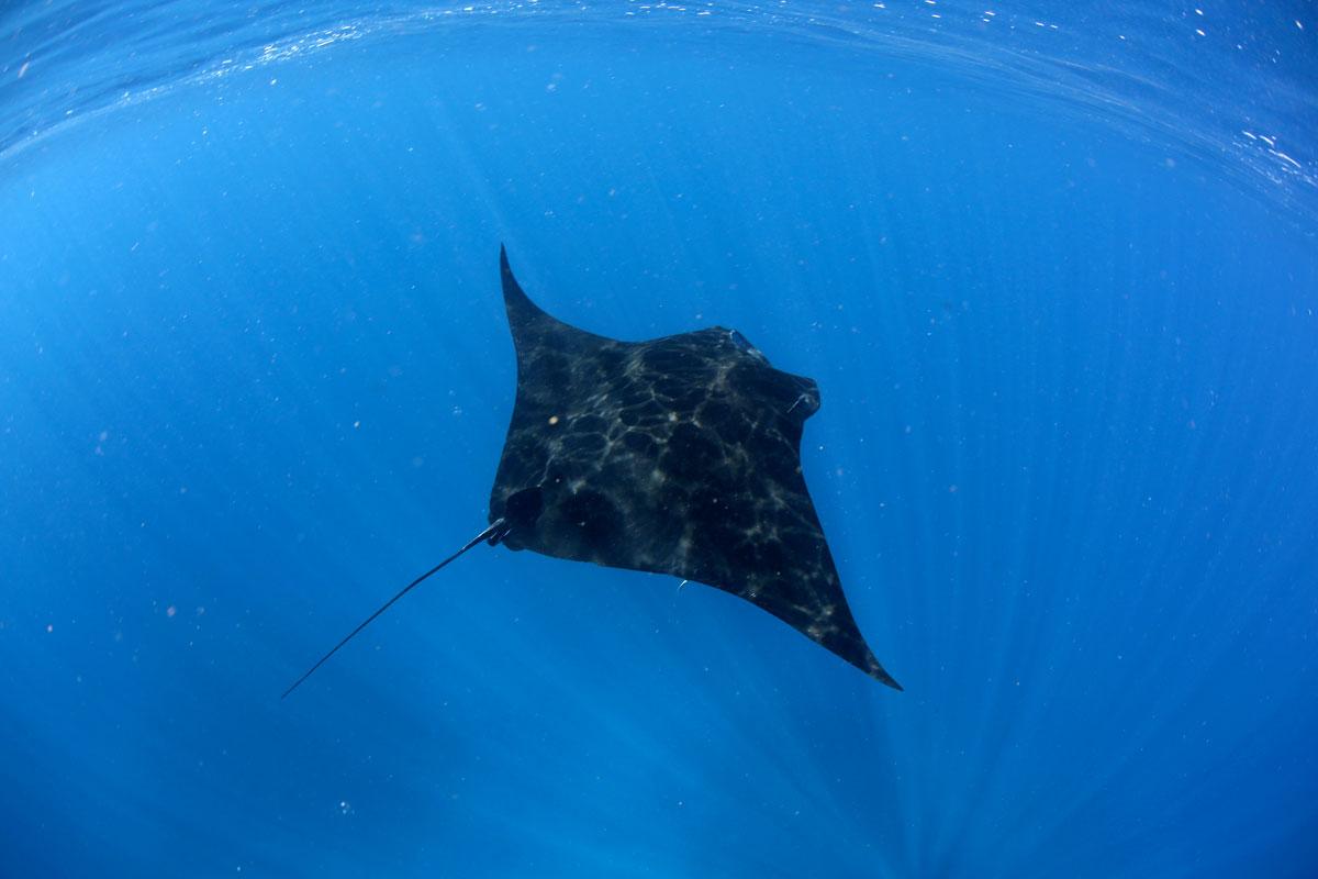 FJI_Taveuni-Island-UW-Rainbow-Reef-Snorkel-©17-Natalia-Baechtold-015.jpg