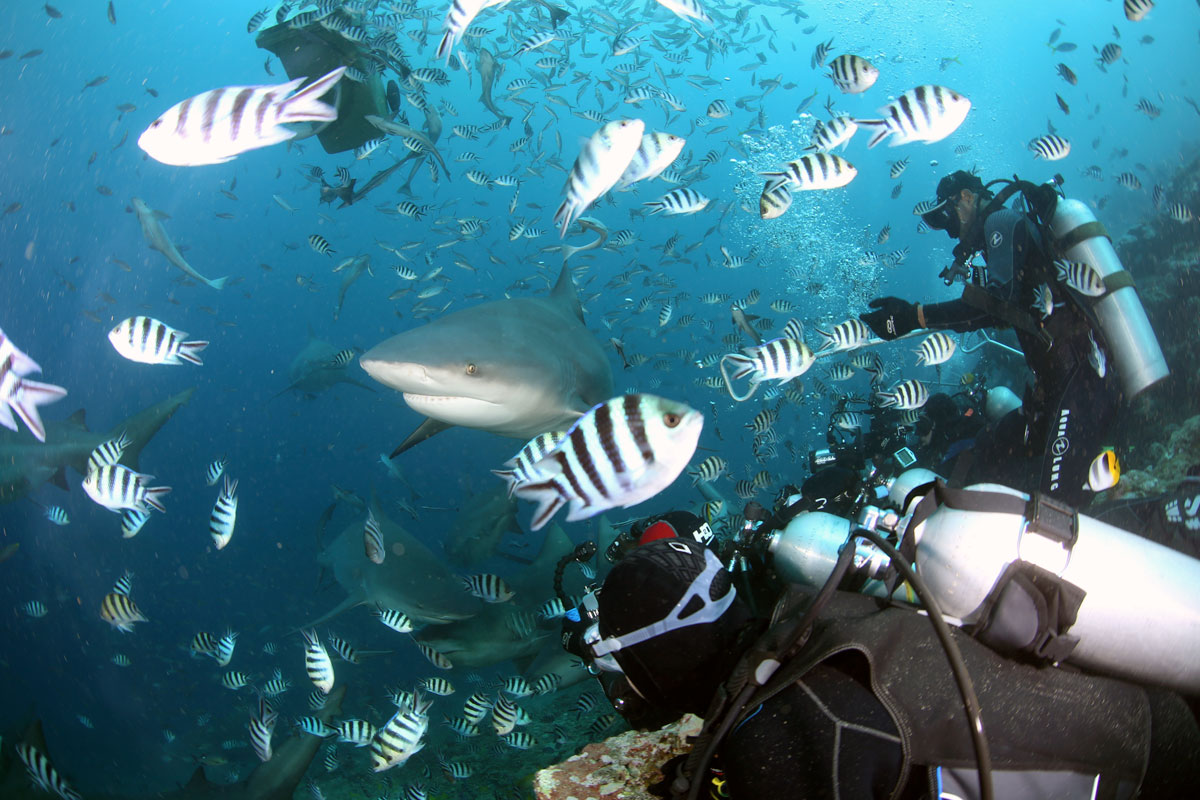 FJI_Viti-Levu-UW-Arena-Shark-Dive-©17-Natalia-Baechtold-089.jpg