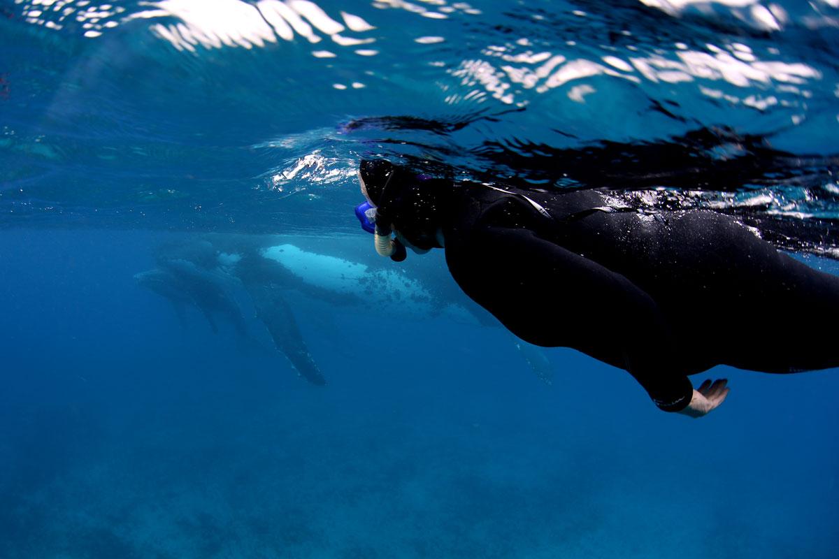 TON_Haapai-Islands-Humpback-Whales-©17-Natalia-Baechtold-138.jpg