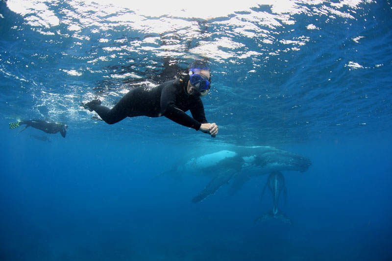Freddy gliding alongside a mother and her new calf in the Haapai islands of Tonga.