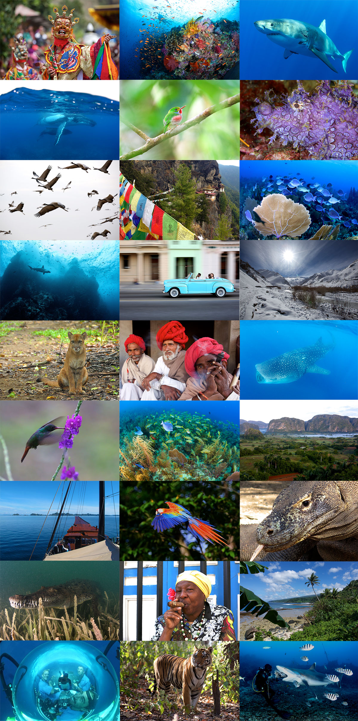 2017 Year Montage © Wild Earth Expeditions.jpg