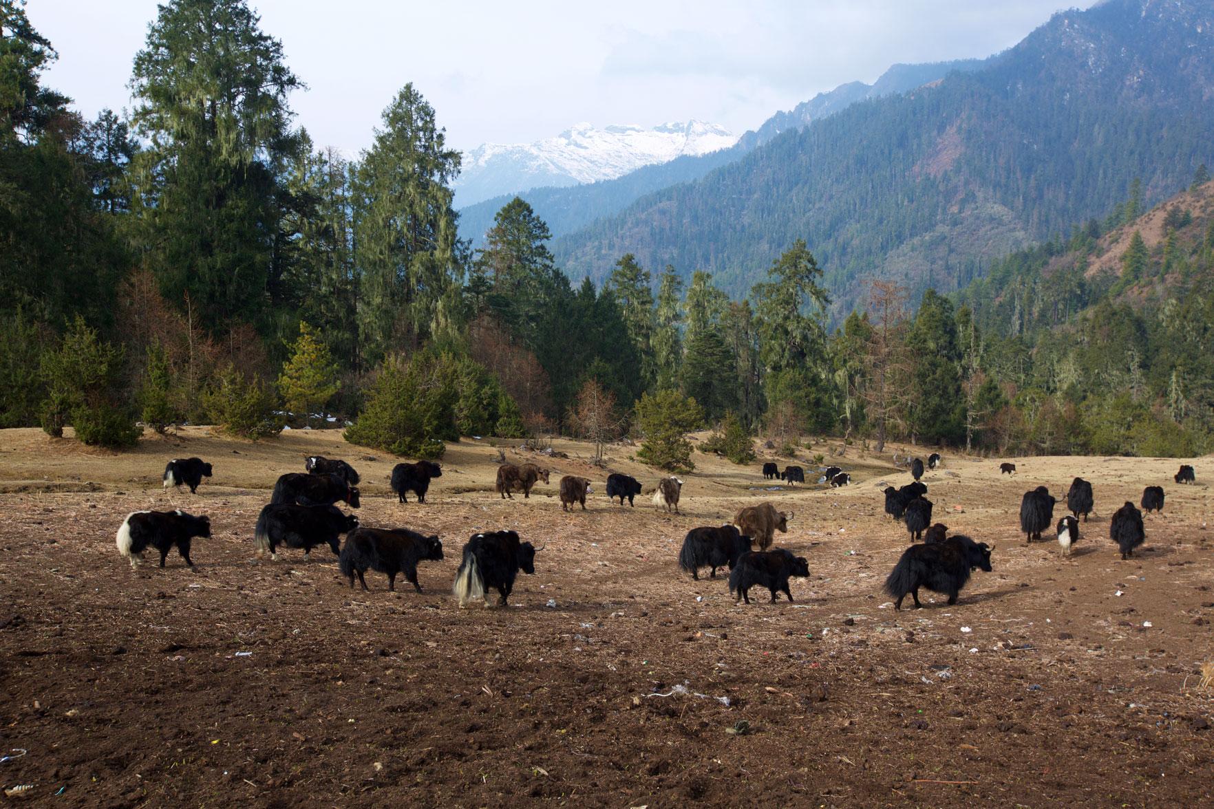 BTN_Sagala-Mountain-pass-trek-and-camp-©17-Thomas-Baechtold-424.jpg