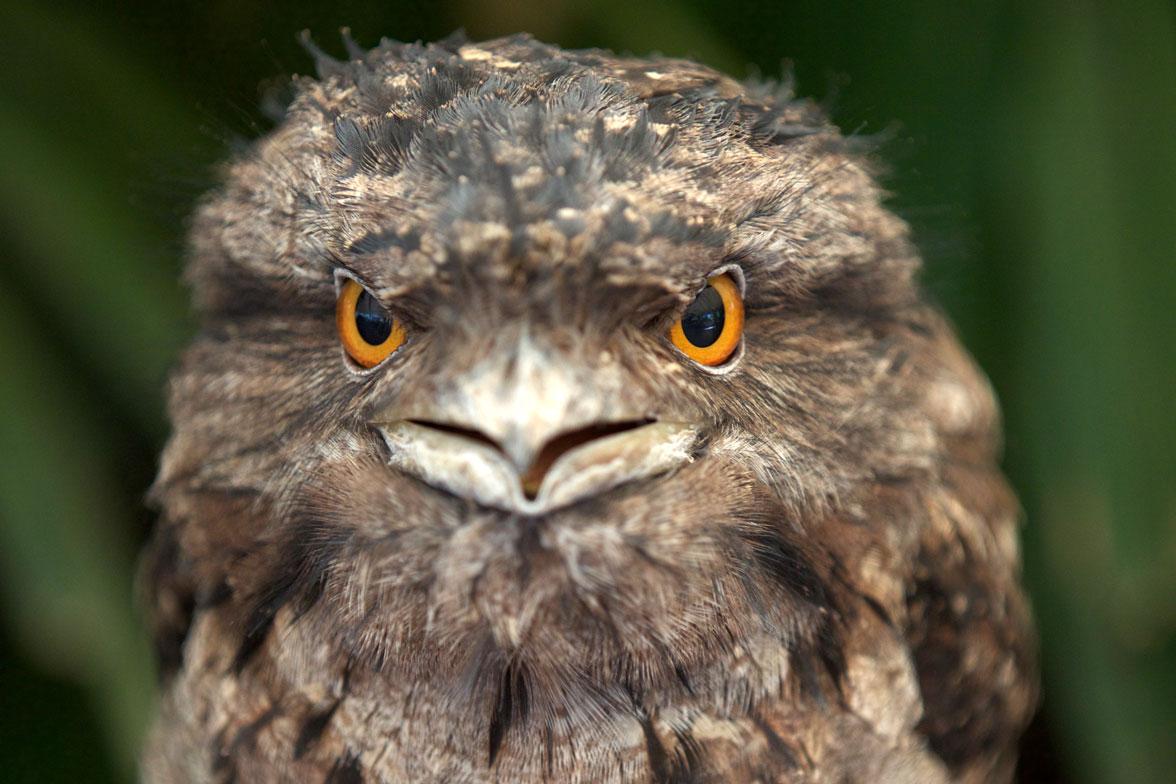 AUS_Daintree-Wildlife-Habitat-©15-Thomas-Baechtold-0519.jpg
