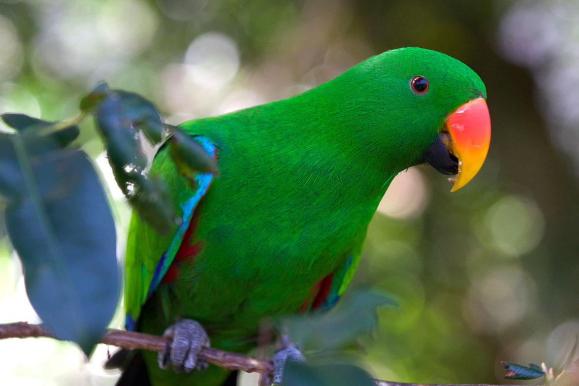 AUS_Daintree-Wildlife-Habitat-©15-Thomas-Baechtold-0545.jpg