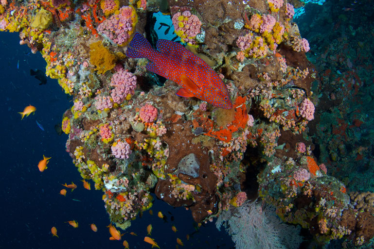 AUS_Great-Barrier-Reef-UW-©12-Thomas-Baechtold-0310.jpg