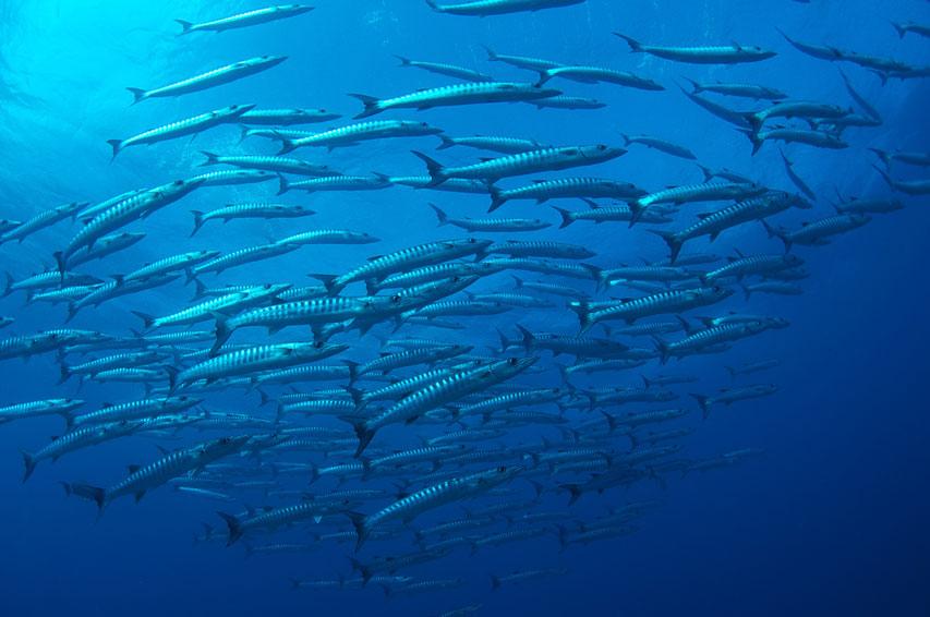 AUS_Great-Barrier-Reef-UW-©12-Thomas-Baechtold-0336.jpg