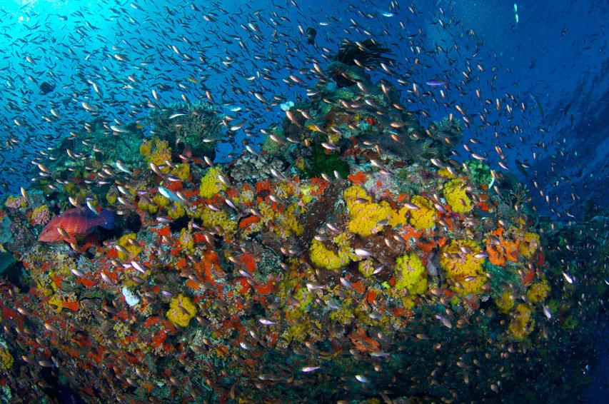AUS_Great-Barrier-Reef-UW-©12-Thomas-Baechtold-0325.jpg