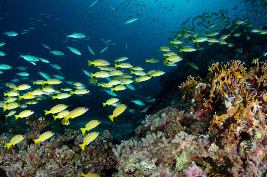 AUS_Great-Barrier-Reef-UW-©12-Thomas-Baechtold-0343.jpg