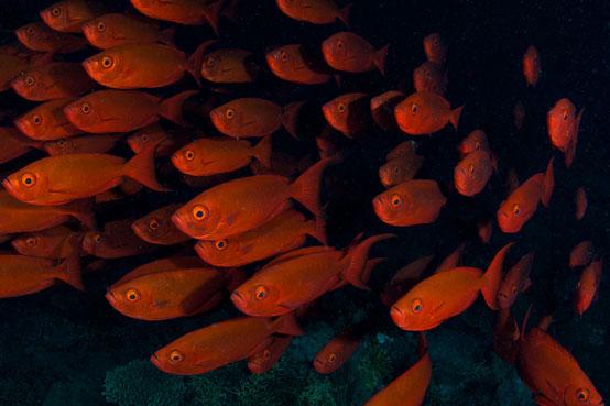 AUS_Great-Barrier-Reef-UW-Cod-Hole-©12-Thomas-Baechtold-0780.jpg