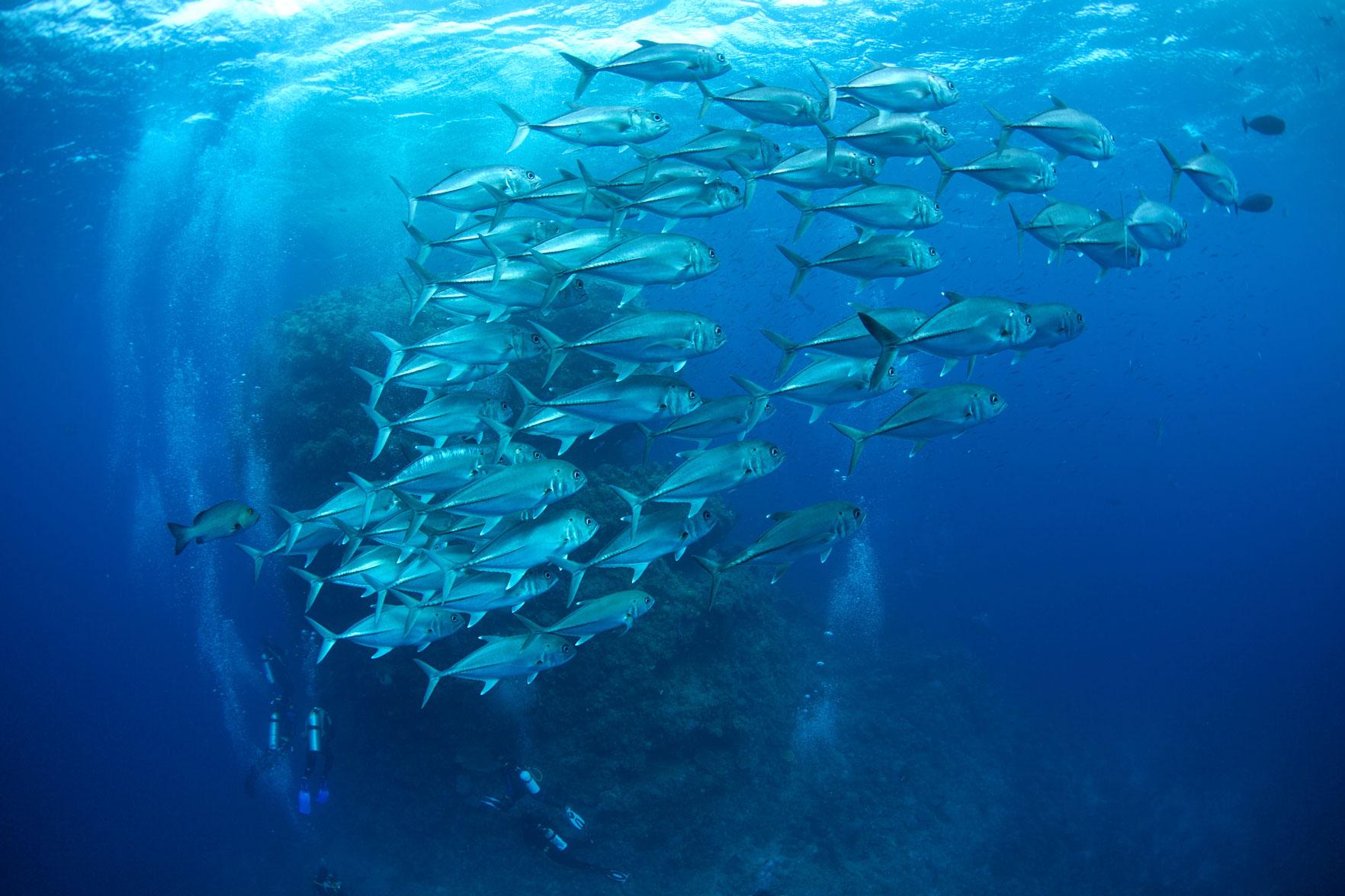 AUS_Great-Barrier-Reef-UW-©15-Thomas-Baechtold-0749.jpg