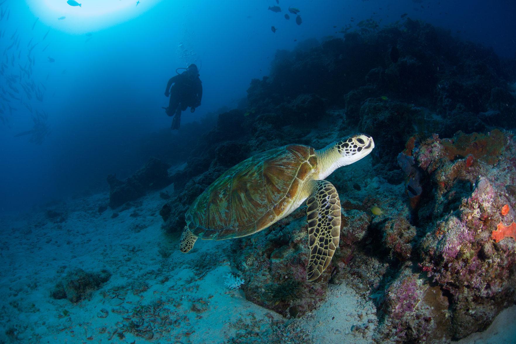 AUS_Great-Barrier-Reef-UW-Cod-Hole-©15-Thomas-Baechtold-1421.jpg