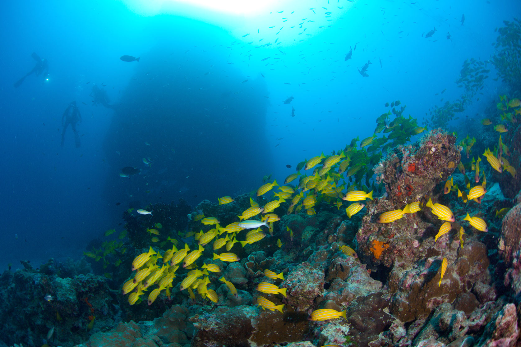 AUS_Great-Barrier-Reef-UW-Lighthouse-Bommie-©15-Thomas-Baechtold-1370.jpg
