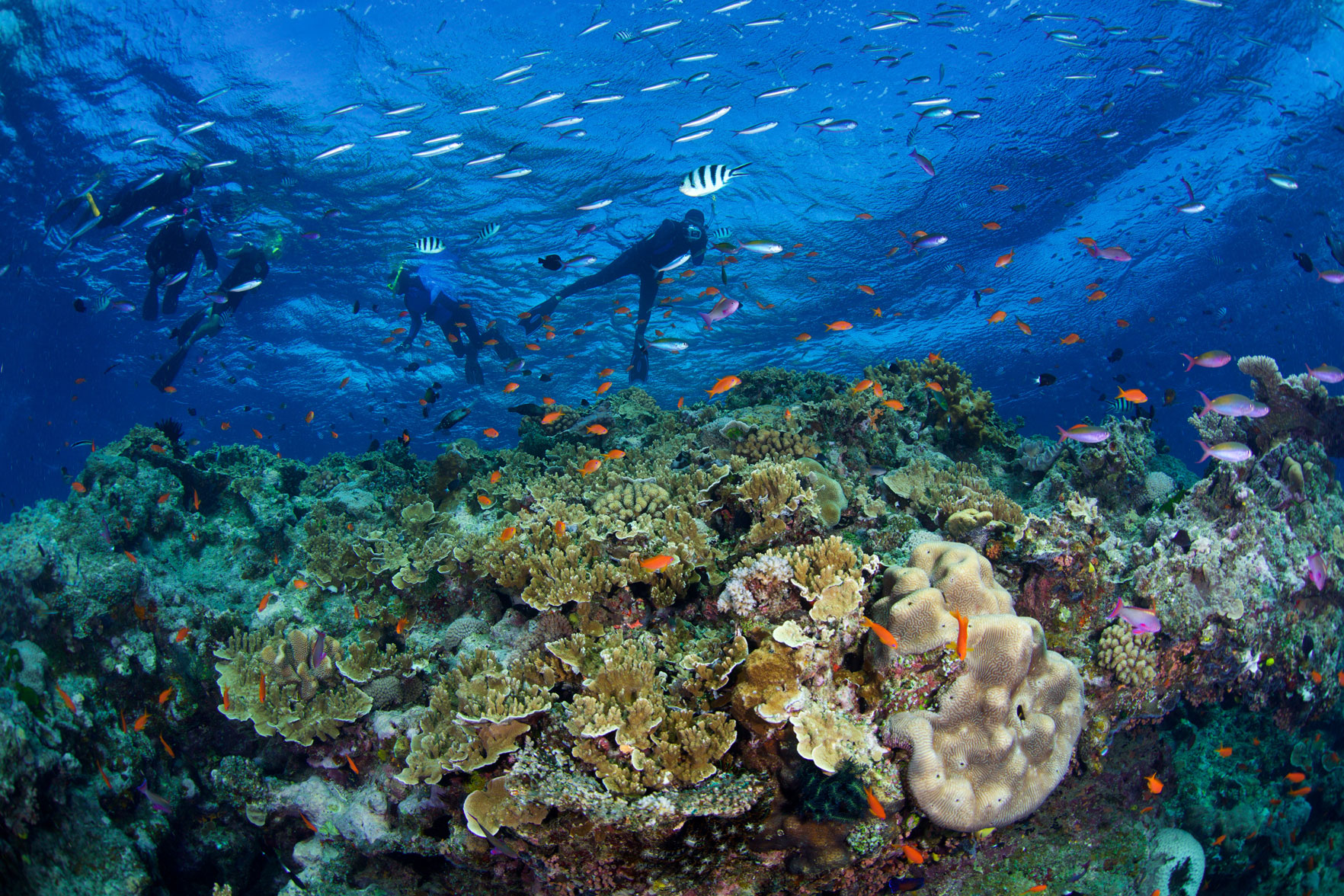 AUS_Great-Barrier-Reef-UW-Pixie-Pinnacle-©15-Thomas-Baechtold-1192.jpg