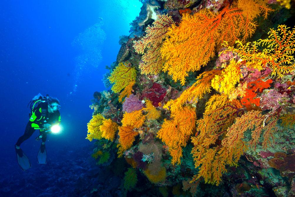 AUS_Soft-Coral-©-Spirit-of-Freedom-3.jpg