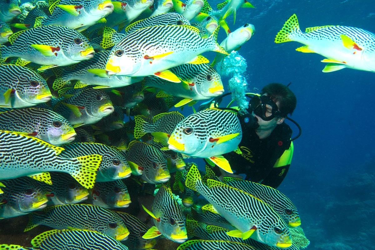 AUS_Sweetlip-Diver-©-Spirit-of-Freedom.jpg