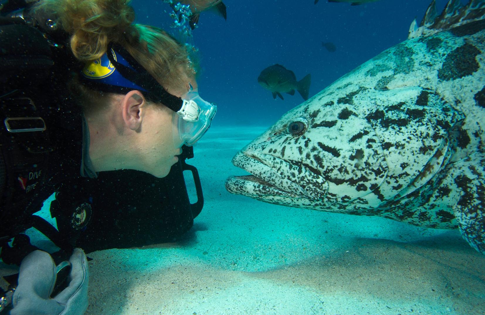 AUS_Diver Grouper © Spirit of Freedom.jpg