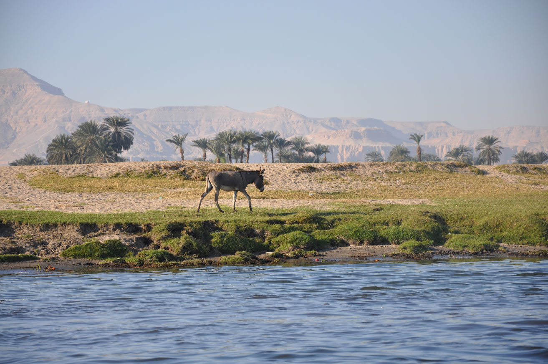 EGY_Aswan-Donkey-Nile-©-AdobeStock_165580336.jpg