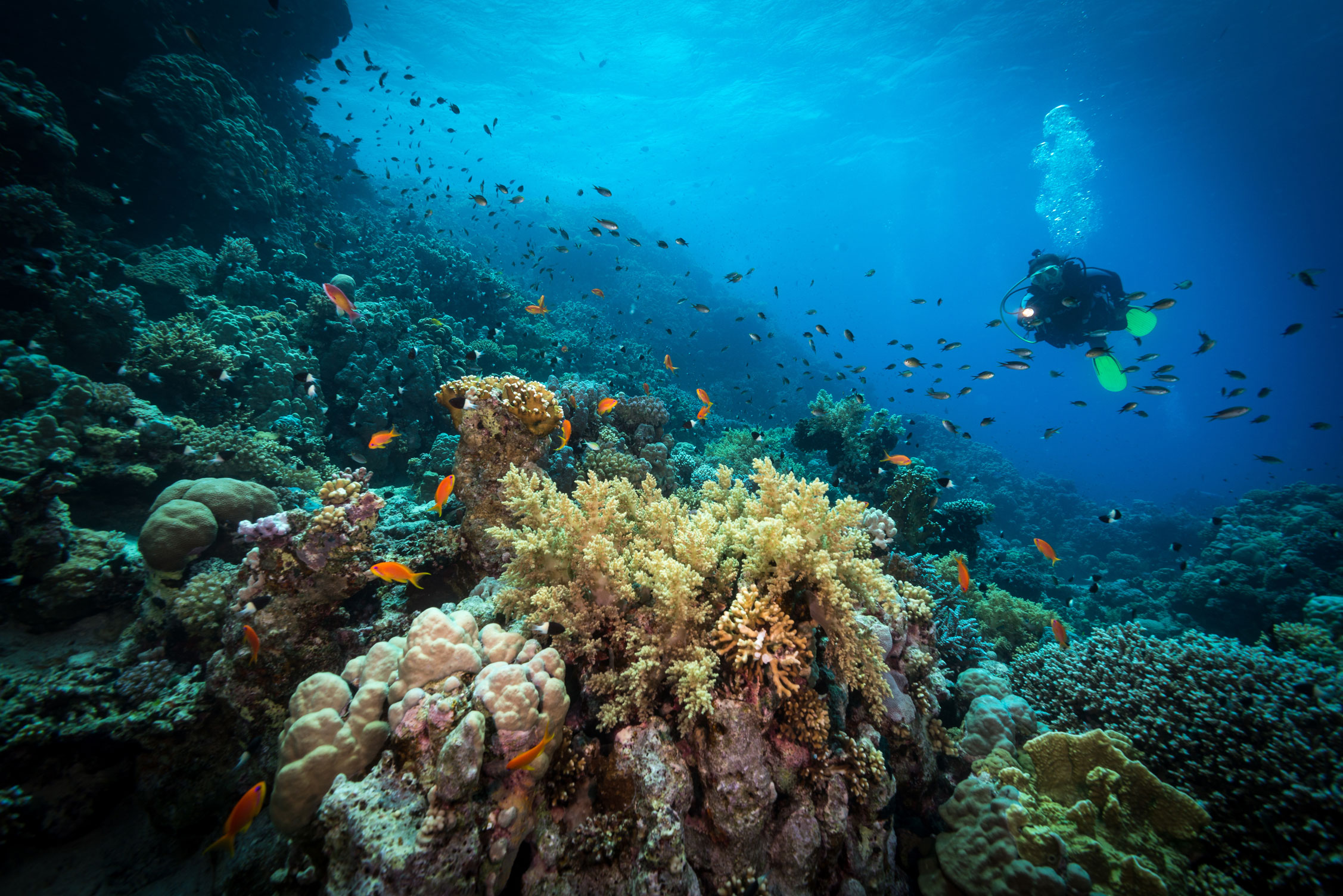 EGY_Red-Sea-UW Reef w Diver-©-AdobeStock_125808020.jpg
