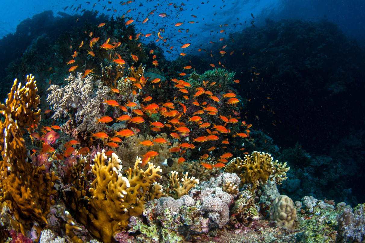 EGY_Red-Sea-UW-Brother-Reef-©-AdobeStock_129119956.jpg