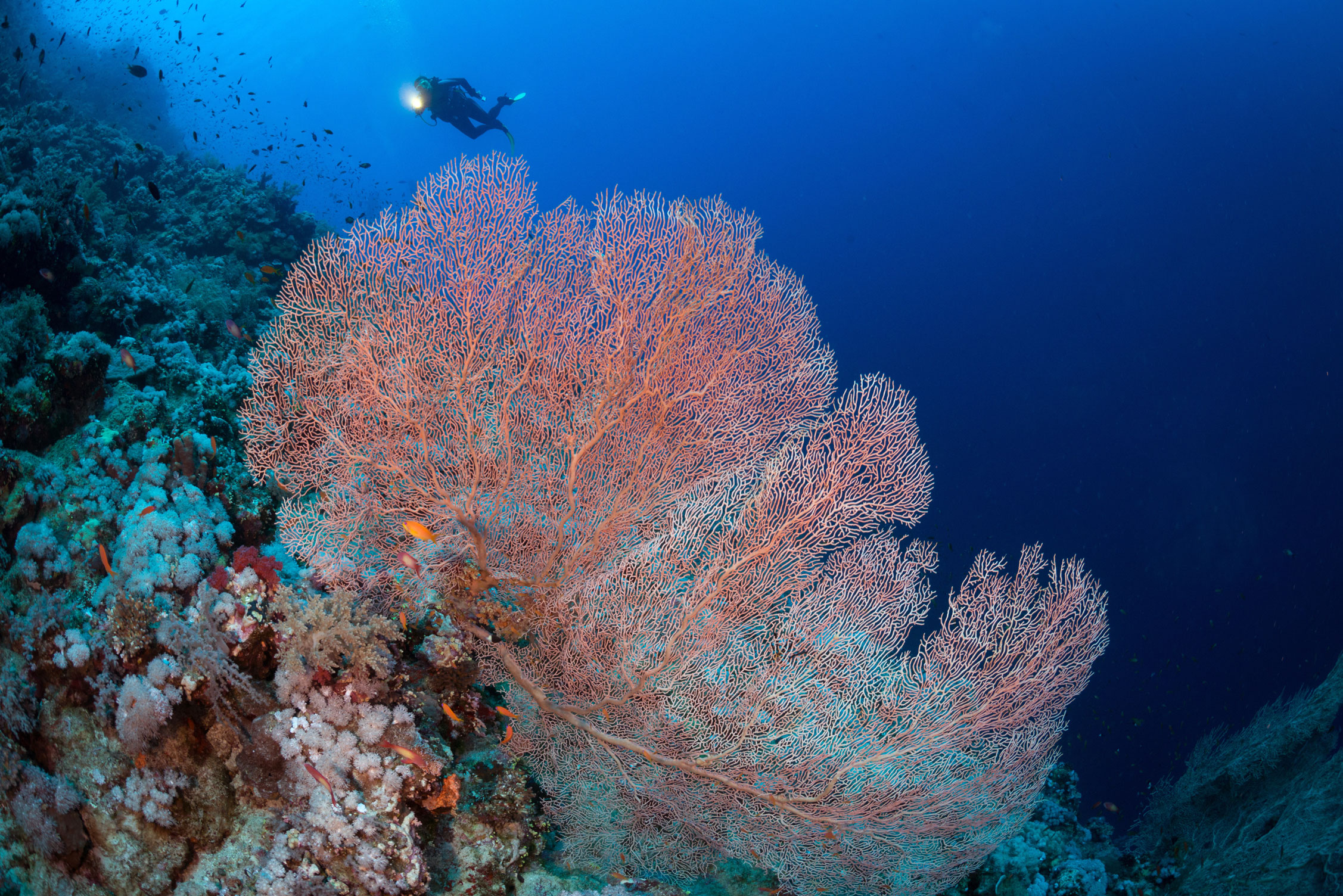 EGY_Red-Sea-UW-Elphinstone-Reef-©-AdobeStock_125981701.jpg