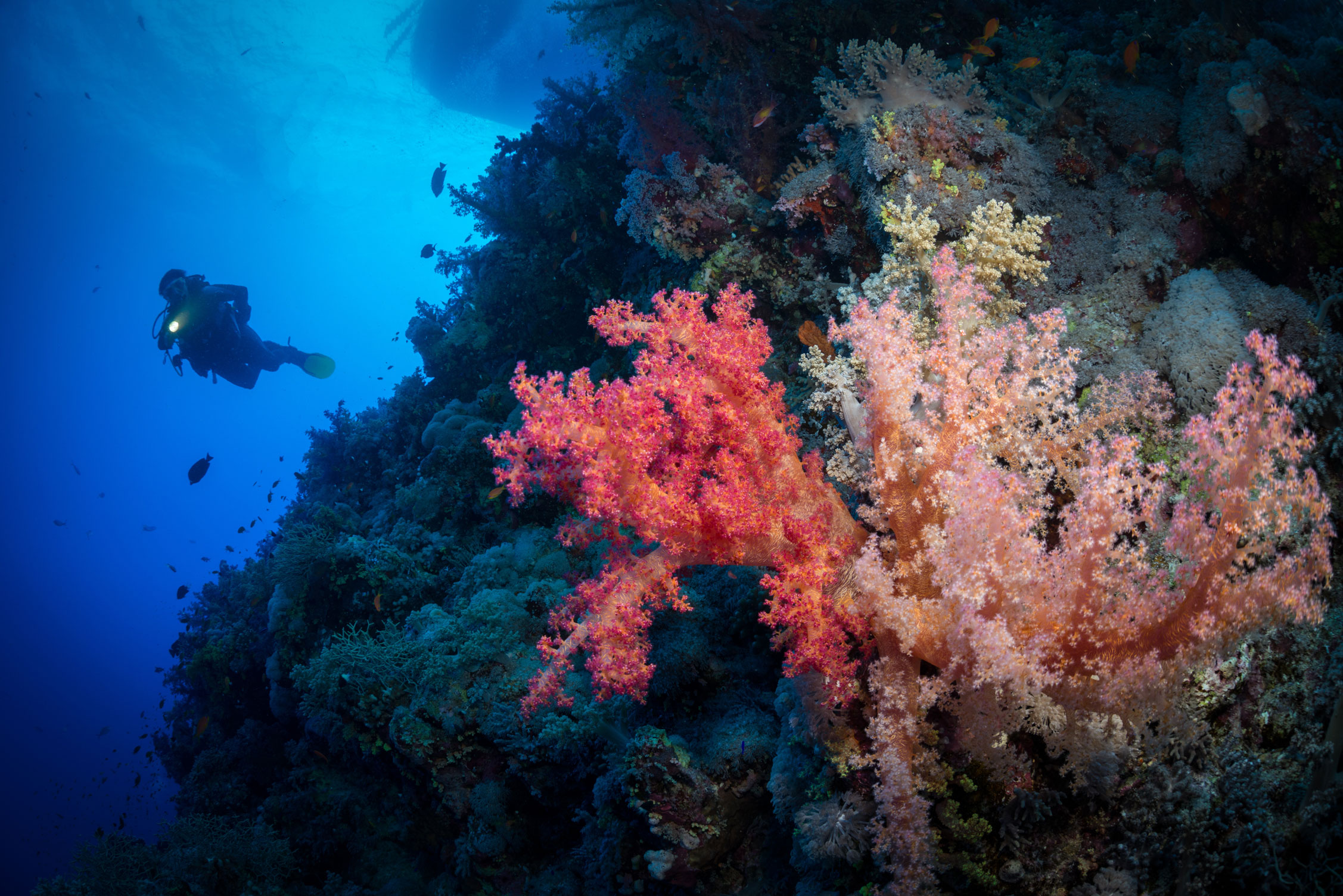 EGY_Red-Sea-UW-St-John's-Reef-©-AdobeStock_125971544.jpg