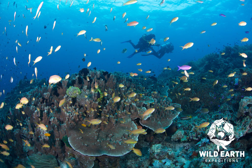 Underwater - Philippines - Wild Earth Expeditions