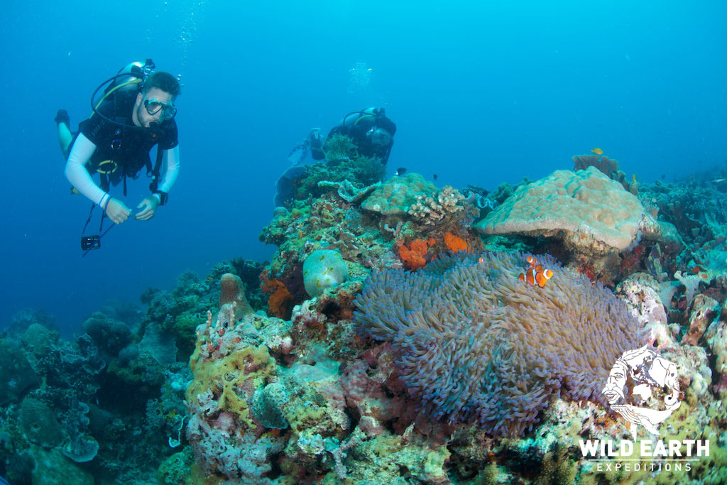PHL_Apo-Island-UW-Coconut-Point-©18-Natalia-Baechtold-072.jpg