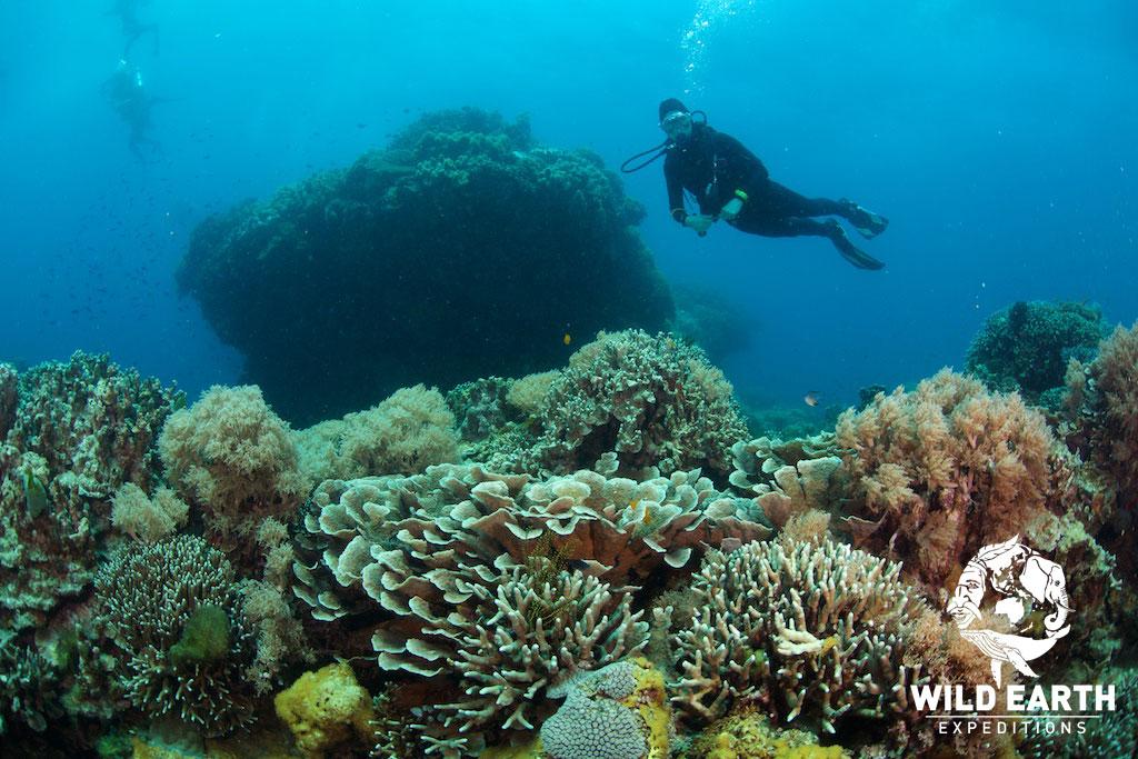 PHL_Apo-Island-UW-Rocky-Point-West-©18-Natalia-Baechtold-009.jpg