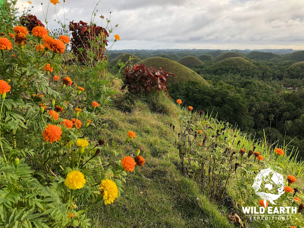 Chocolate Hills, Bohol - Philippines - Wild Earth Expeditions