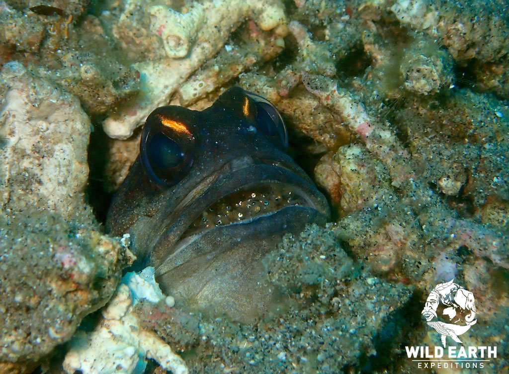 Muck Diving - Philippines - Wild Earth Expeditions