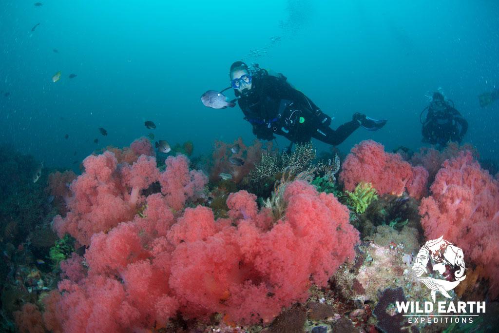 PHL_Malapasqua-Island-UW-Deep-Rock-©18-Natalia-Baechtold-061.jpg