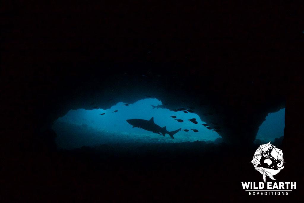 PHP_Malapasqua-Is-UW-Gato-Island-©18-Natalia-Baechtold-144.jpg