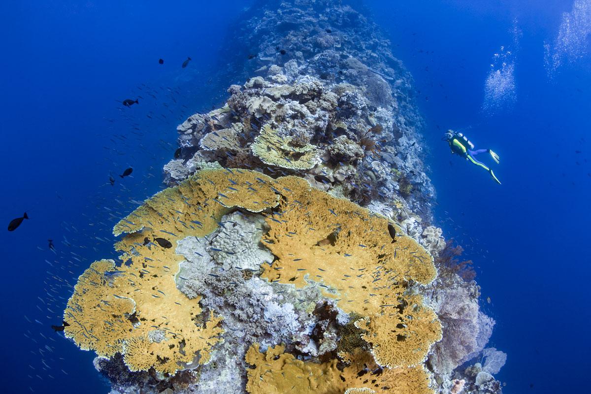 IDN_Wakatobi-Resort-Blade-Reef-©-Wakatobi-Resort-R4A0638a.jpg