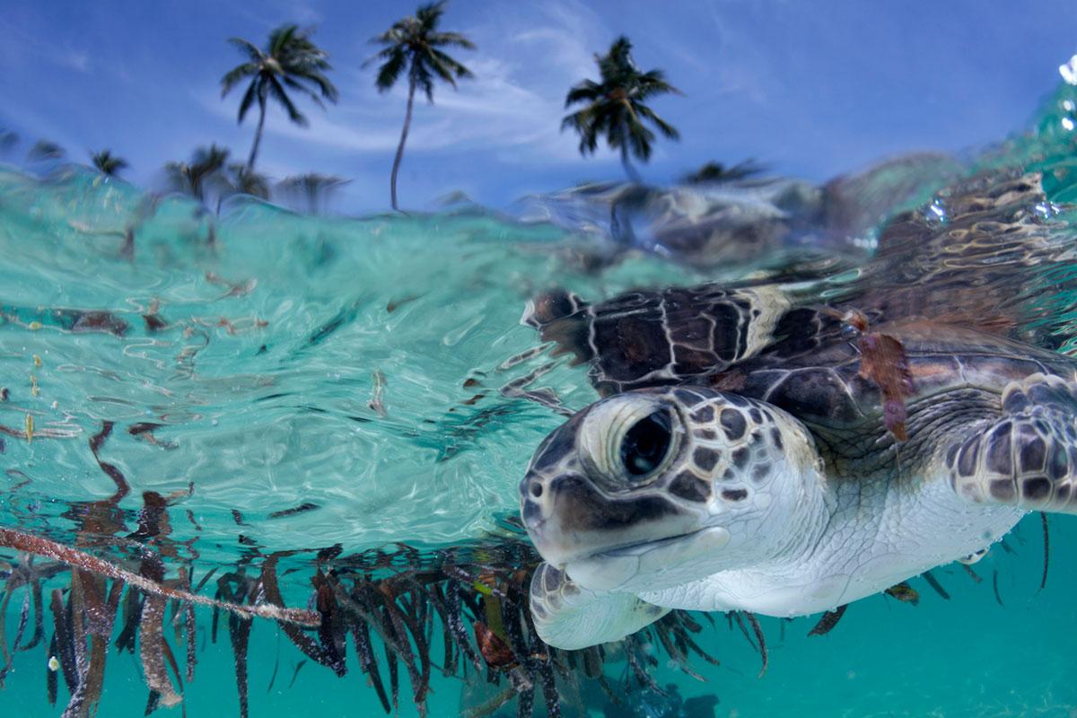 IDN_Wakatobi-Resort-House-Reef-Baby-Turtle-©-Wakatobi-Resort-009.jpg