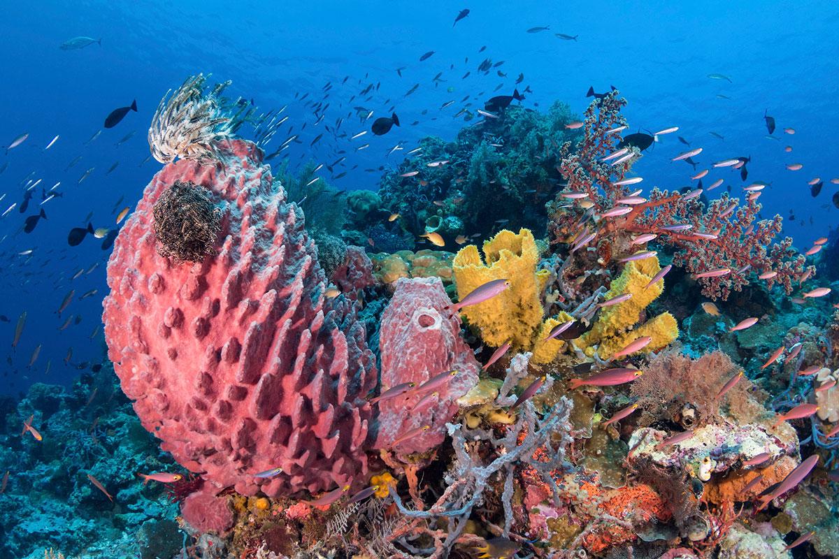 IDN_Wakatobi-Resort-House-Reef-©-Wakatobi-Resort-WS002.jpg