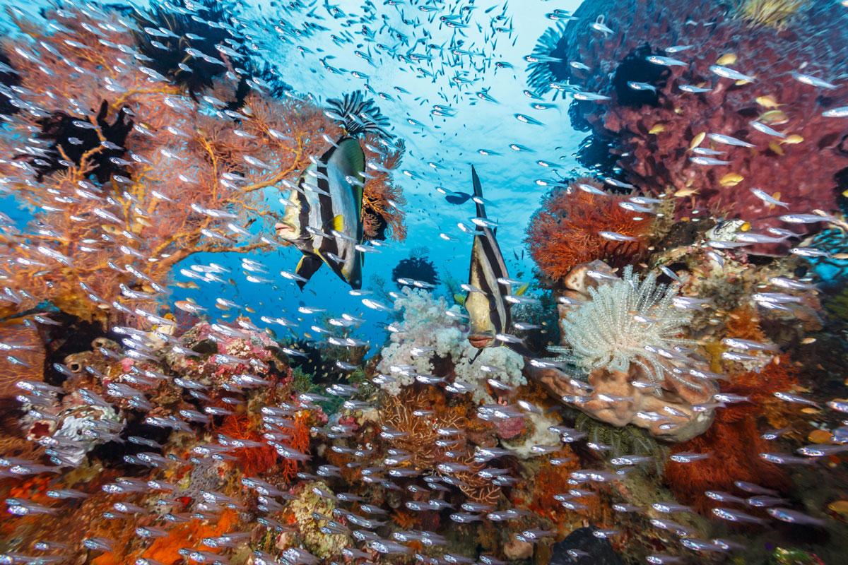 IDN_Wakatobi-Resort-Reef-©-Wakatobi-Resort-MF006.jpg